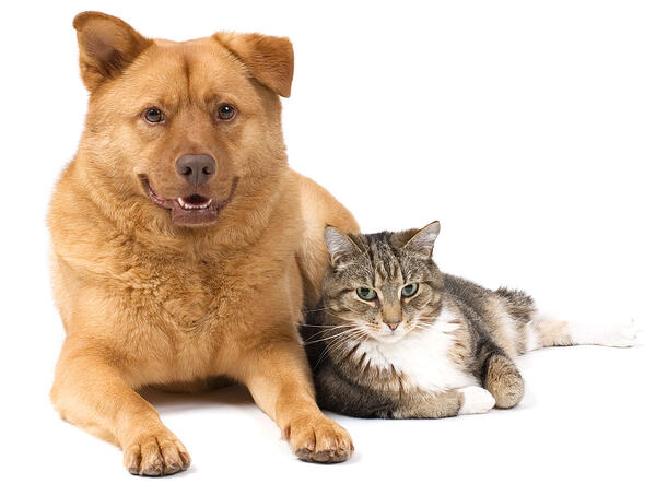 Fulfillment for Pet Care Brands